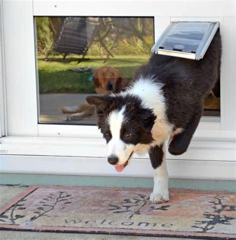 endura flap thermo sash  window cat door dog door