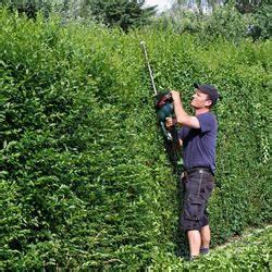Liguster Und Ligusterhecken Pflanzen Pflegen Und