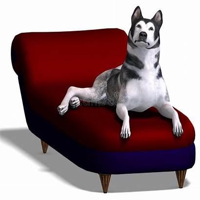 Malamute Alaskan Dog