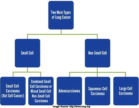 lung cancer    risk factors   prevention