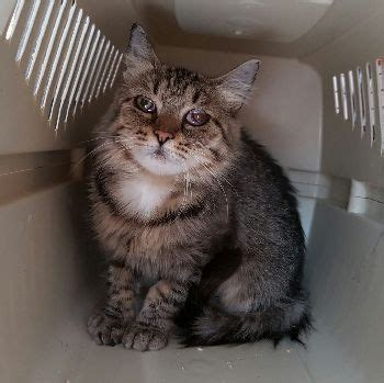katzenschutzbund koeln ev patentiere