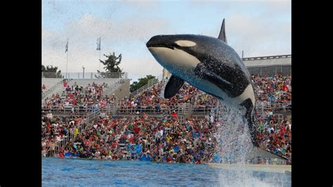 Shamu Show Sea World San Diego July Youtube
