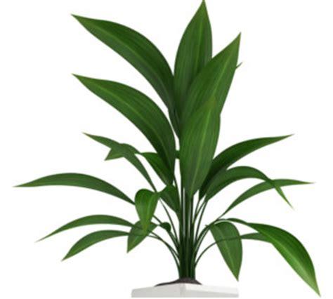 plantes de bureau sans soleil guide des plantes qui nécessitent peu de lumière m6 météo
