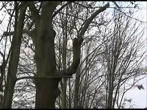 Rasenlüfter Selber Bauen : kugelb ume schneiden cut ball trees doovi ~ Lizthompson.info Haus und Dekorationen