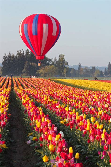 tulips festival in usa skagit valley tulip field the skagit valley lies in the northwestern corner of the state of