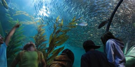 aquarium of the bay things to do in san francisco in summer 2017 attractions events more