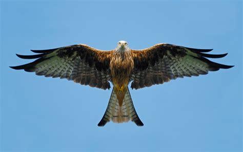 Birds Of Prey Poisoned Because Law Not Upheld