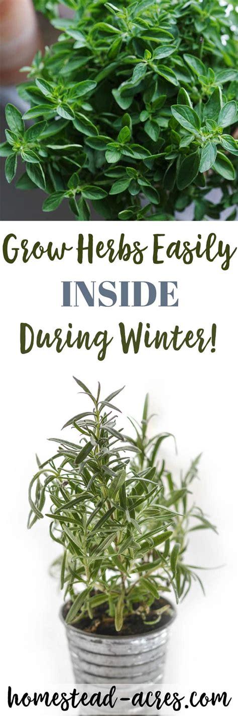Growing Herbs Inside growing herbs indoors tips for growing herbs indoors in