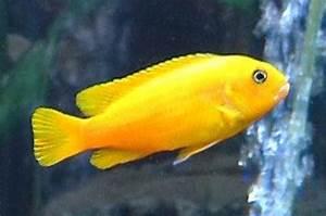 Süßwasserfische Fürs Aquarium : bunte s wasserfische f rs aquarium xr09 hitoiro ~ Lizthompson.info Haus und Dekorationen