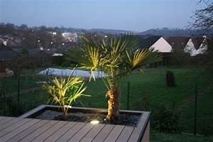 Palmier De Jardin : composite ardoise et palmier contemporain jardin ~ Nature-et-papiers.com Idées de Décoration