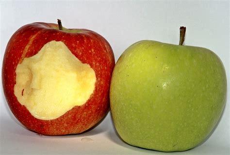 cuisiner les pommes cuisiner les pommes pour bébé quelles variétés utiliser