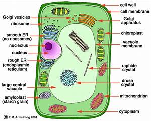 Solve The Solution Not The Problem  Specialised Cell