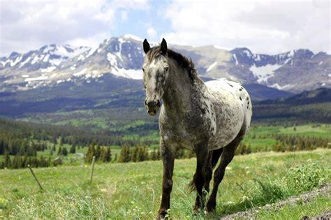 montana wild horses isabella horse sperduto via