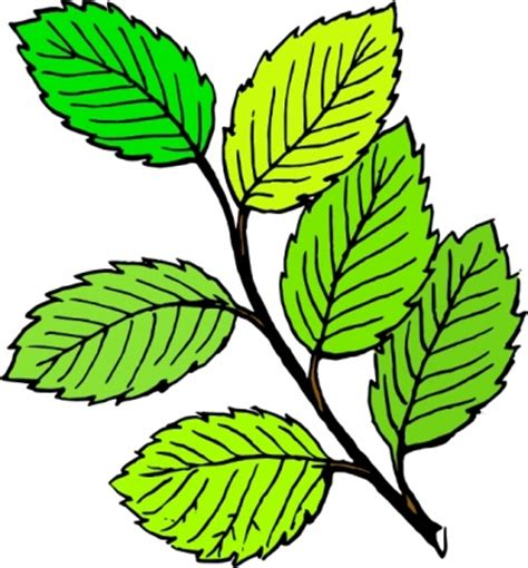 green leaf clipart clipart panda  clipart images