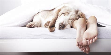 Sleep And Pets by 30 Enemies Of A S Sleep Huffpost