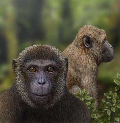 Oldest Ape & Old World Monkey Fossils Spotlight Primate