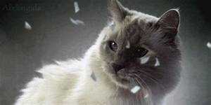 Cat Watching GIF - Find & Share on GIPHY