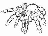 Coloring Spider Realistic Insect Printable Coloringpagesfortoddlers Disimpan Dari Potter Harry Adult Books sketch template