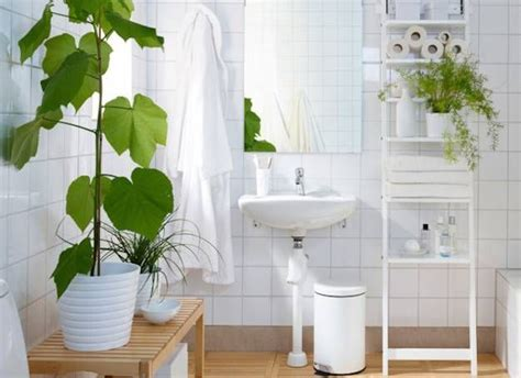 Plants For Bathrooms With No Light by 25 Best Ideas About Bathroom Plants On Plants