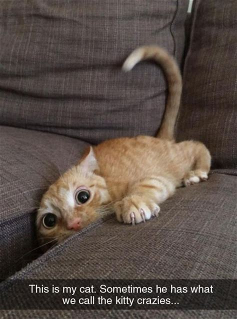 Crazy Cat Memes - crazy cat meme funny pictures quotes memes jokes
