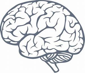 Brain PNG Transparent Brain.PNG Images. | PlusPNG