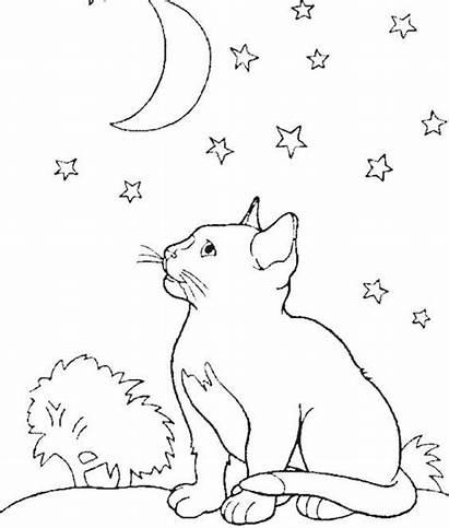 Coloring Moon Cat Night Kittens Kitten Animal