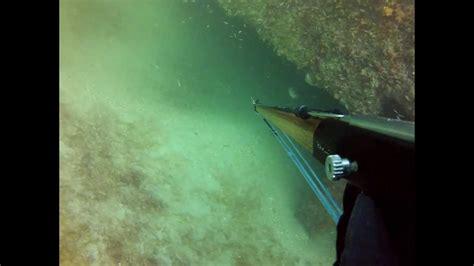 grouper goliath reef veterans