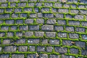 Moos Entfernen Terrasse : unkraut auf gehweg entfernen mit salz moos entfernen ~ Michelbontemps.com Haus und Dekorationen