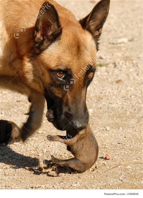 Picture Of Female Dog And Puppies