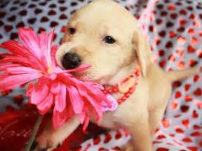 Valentine's Day Puppies and Cats