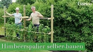 Weinspalier Freistehend Bauanleitung : bauanleitung himbeerspalier bauen youtube ~ A.2002-acura-tl-radio.info Haus und Dekorationen