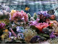 Coral Reef Wallpaper Widescreen Coral Reef Wallpaper  Coral Reef Wallpaper 1920x1080