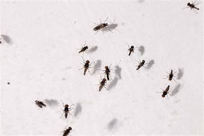 Flies Gnats Tiny Gnat Found Georgia Above