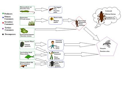 web cuisine food web