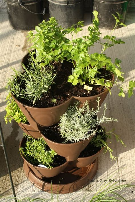 fines herbes en pot interieur passeport cuisine fruits l 233 gumes fines herbes