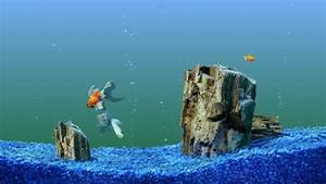25+ Aquarium Backgrounds, Wallpapers, Images, Pictures ...