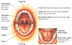 Diagram Of Right Rear Molar by Cancer
