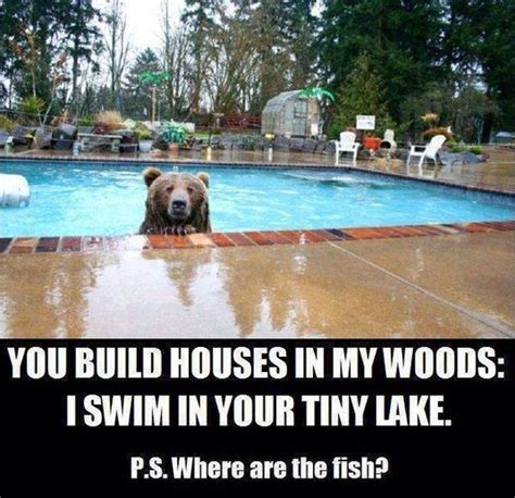 A Bear In My Swimming Pool  Funny Pictures Hilarious