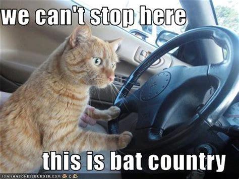 stop    bat country   meme