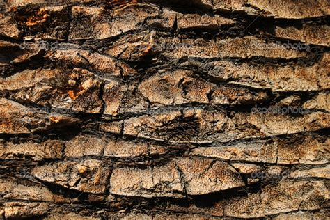 real birch bark wallpaper wallpapersafari
