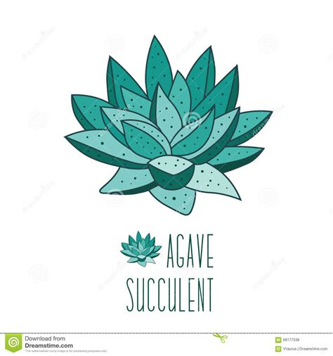 succulent plant symbolism succulent plants stock vector image 68177538