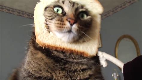 Breading A Cat In Hd Adorable Chubby Kitty Youtube