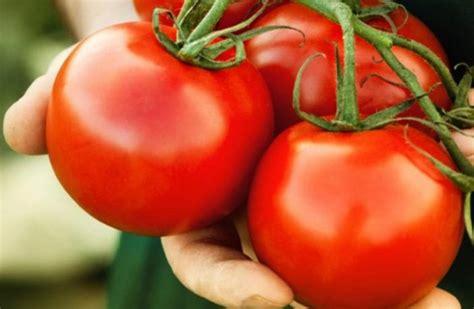 Paralajmërim nga mjekët: Mos hani shumë domate, ju sjell këto sëmundje - Online