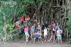Aurora's Bewitching Balete Tree | Travel Up