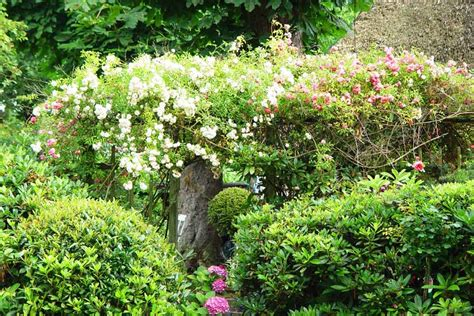 Blütensträucher Für Gärten Im Sommer