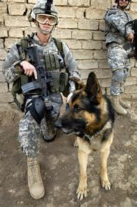 Military War Dog German Shepherd