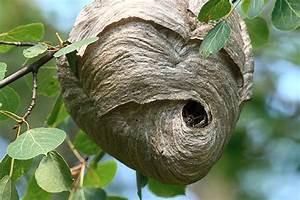 Détruire Un Nid De Guêpes : d truire un nid de gu pes extermination complete inc ~ Melissatoandfro.com Idées de Décoration