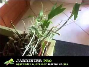 Comment Soigner Une Orchidée : comment bouturer une orchid e facilement youtube ~ Farleysfitness.com Idées de Décoration