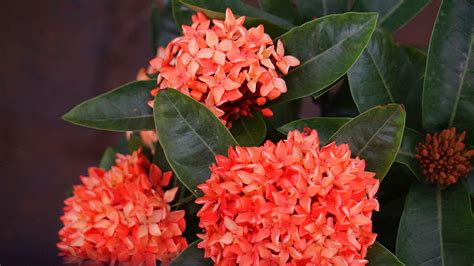 banco de imagens plantar folha flor botanica flora