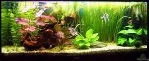 Aquarium Einrichten Beispiele : aquarium von kim gesellschaftsbecken mit skalare ~ Frokenaadalensverden.com Haus und Dekorationen